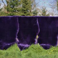 Lammfell geschoren - VIOLETT FARBEN 80-90 Violett