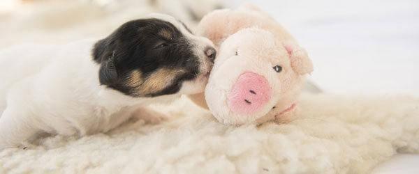 Kuscheldecken für Hunde und Katzen
